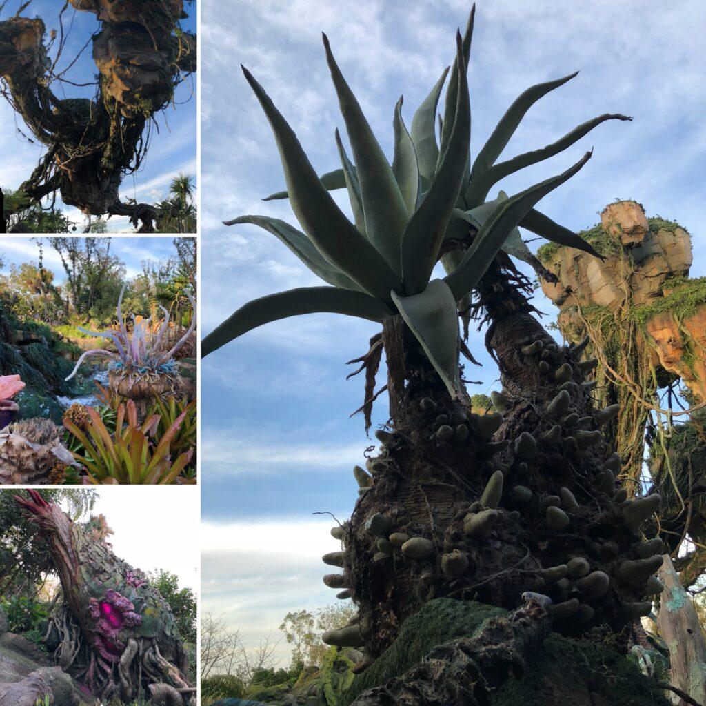 Plants Pandora