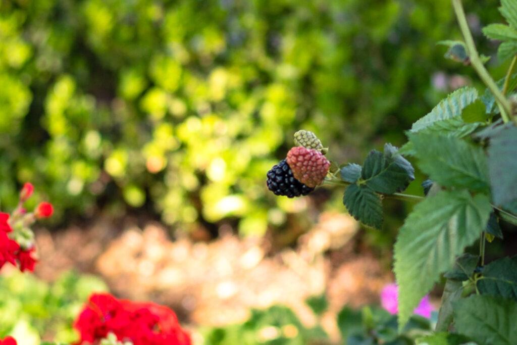Epcot English Tea Garden